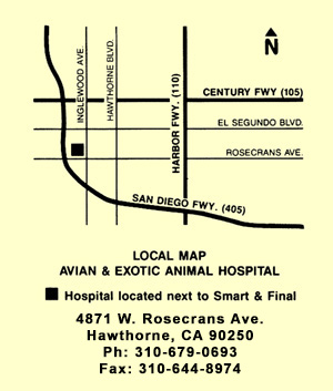 Map for Avian and Exotic Animal Hospital