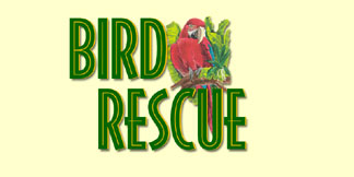 Learn About Bird Rescue Organizations!